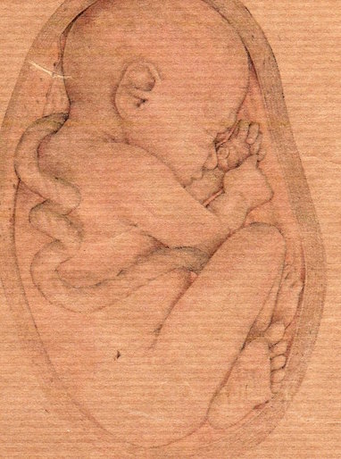 image_fetus-in-womb-drawing-53-1